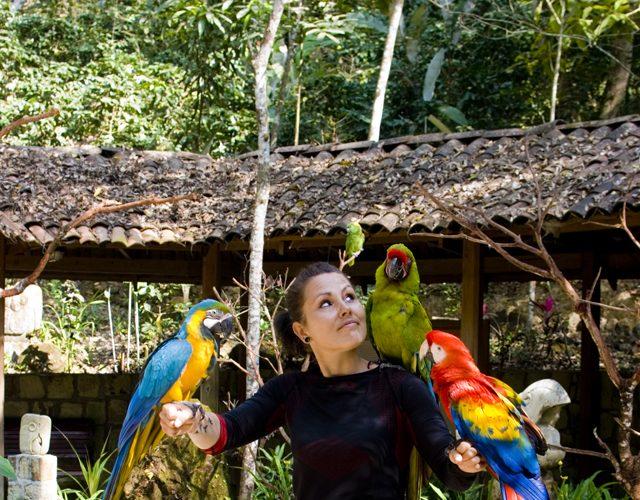 z papugami